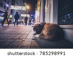 A Stray Abandoned Dog During...