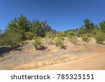 Small photo of Dry road in the countryside with acacia caven trees and pines in the nice day
