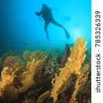 scuba diving underwater | Shutterstock . vector #785326339