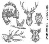 wild animal and bird isolated... | Shutterstock .eps vector #785329381