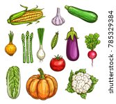 vegetable sketches set of fresh ... | Shutterstock .eps vector #785329384