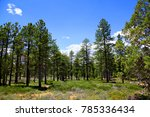 ponderosa pine forest of bryce... | Shutterstock . vector #785336434