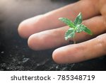 a small plant of cannabis... | Shutterstock . vector #785348719