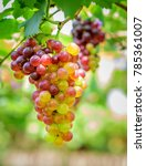 fresh grape fruit. | Shutterstock . vector #785361007