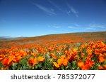 california poppy super bloom | Shutterstock . vector #785372077