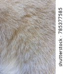 Stock photo close up brown white cat fur 785377585