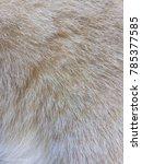 Close Up Brown White Cat Fur
