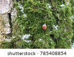 ladybug on a trunk of an oak.... | Shutterstock . vector #785408854