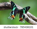 butterfly   madagascan sunset... | Shutterstock . vector #785438101