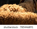 wool of white sheep  | Shutterstock . vector #785446891