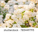 closeup of blossoming bush of... | Shutterstock . vector #785449795