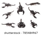 group of black scorpion on... | Shutterstock . vector #785484967