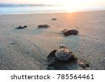 Baby Turtles Doing Their First...
