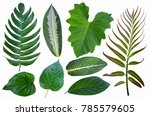 pattern of beautiful leaves on... | Shutterstock . vector #785579605