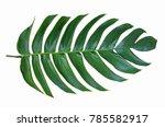 big green leaf of monstera... | Shutterstock . vector #785582917