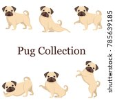 set of dogs  a set of beautiful ... | Shutterstock .eps vector #785639185