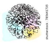 floral elements for design ...   Shutterstock .eps vector #785641735