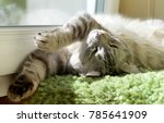 funny resting cat in the...   Shutterstock . vector #785641909