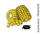 corn cob hand drawn vector... | Shutterstock .eps vector #785663335