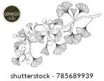 collection ginkgo biloba... | Shutterstock .eps vector #785689939