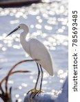 egret bird   bird   egret   Shutterstock . vector #785693485