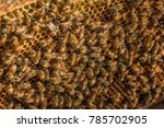 close up view of the working... | Shutterstock . vector #785702905
