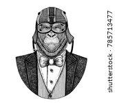 gorilla  monkey  ape. animal... | Shutterstock . vector #785713477