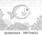 a surgeon fish swimming over a...   Shutterstock .eps vector #785714611