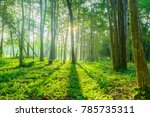 forest with sunlight background.... | Shutterstock . vector #785735311