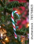 Small photo of Christmas tree with a candy cane; Nordmann fir (Abies nordmanniana)