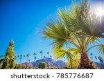 Coachella Valley Vegetation. Palm Springs, California, United States of America.  - stock photo