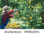 farmer orange lady the... | Shutterstock . vector #785816551