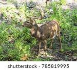 deer in the forest | Shutterstock . vector #785819995