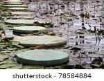 stepping stones through a water lily pond - stock photo