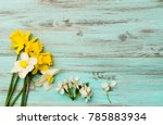 spring flowers  . narcissus on... | Shutterstock . vector #785883934