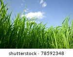 Green Field. Tall grass against the sky - stock photo