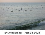 seagulls on calm sea | Shutterstock . vector #785951425