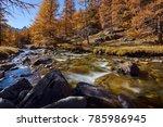 la clar e river with larch...   Shutterstock . vector #785986945