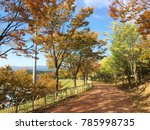 colorful autumn landscape.  ... | Shutterstock . vector #785998735