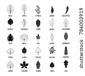 leaf icons set. simple... | Shutterstock . vector #786003919