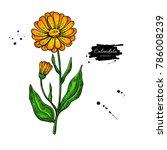 calendula vector drawing.... | Shutterstock .eps vector #786008239