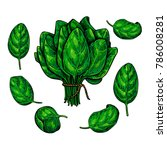 spinach leaves hand drawn... | Shutterstock .eps vector #786008281