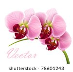 orchid flower vector background | Shutterstock .eps vector #78601243