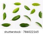green leaves on white...   Shutterstock . vector #786022165