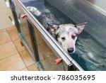 picture of an australian... | Shutterstock . vector #786035695