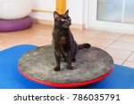 black cat stands on a wobble... | Shutterstock . vector #786035791