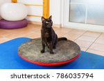 black cat stands on a wobble... | Shutterstock . vector #786035794