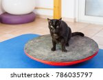 black cat stands on a wobble... | Shutterstock . vector #786035797