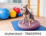 picture of a australian... | Shutterstock . vector #786035941