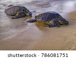 A Family Of Turtles Beaching T...